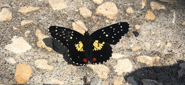 Butterfly, Colorful, Mexico, Chiapas, Nature, Animal