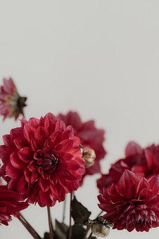 Dahlias, Negative Space, Still Life, Easter, Welcome
