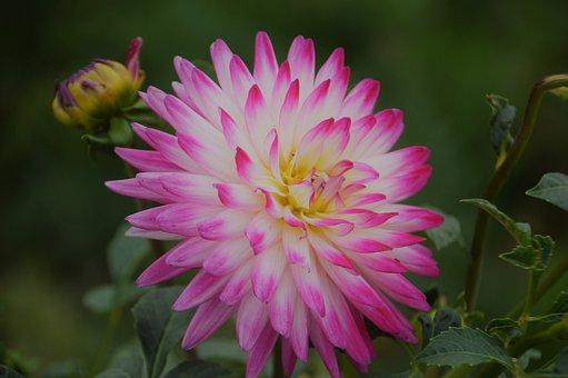 Flower, Decoration, Garden, Colorful, Flora, Petals
