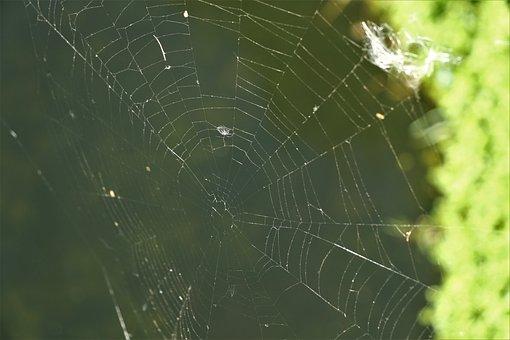 Cobweb, Web, Nature, Dew, Beaded, Drip, Dewdrop