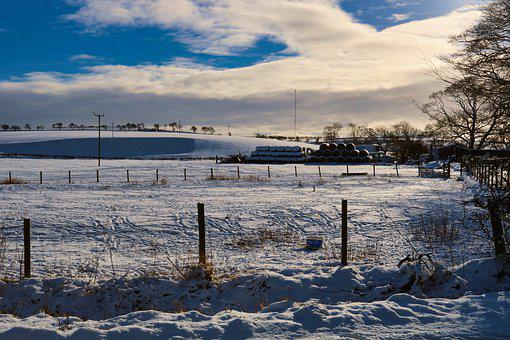 Snow, Farm, Winter, Nature, Rural, Country, Horse