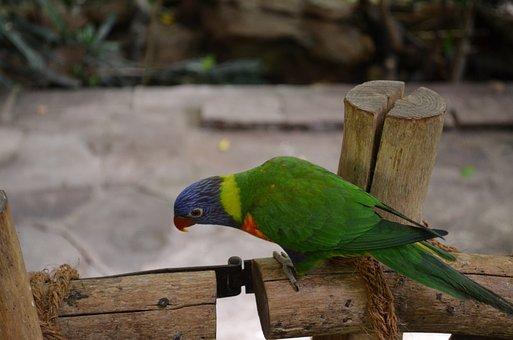 Bird, Parrot, Animal, Zoo, Fence