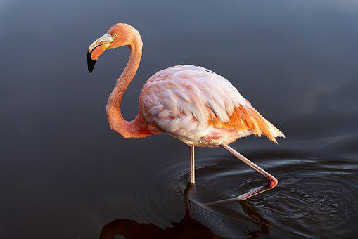 Flamingo, Bird, Pink, Animal, Wildlife, Feather