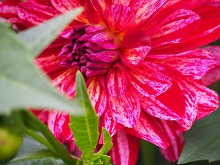 Flower, Flower Power, Summer, Sun, Garden, Flowers