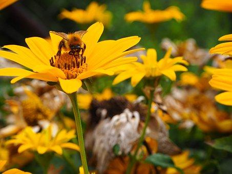 Flower, Flower Power, Sunflower, Summer, Nature