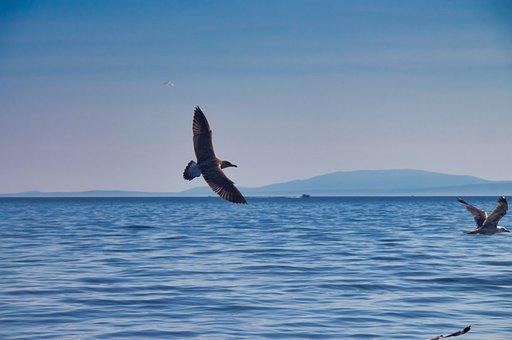 Sea, Bird, Seagull, Animal World, Sky, Freedom, Blue