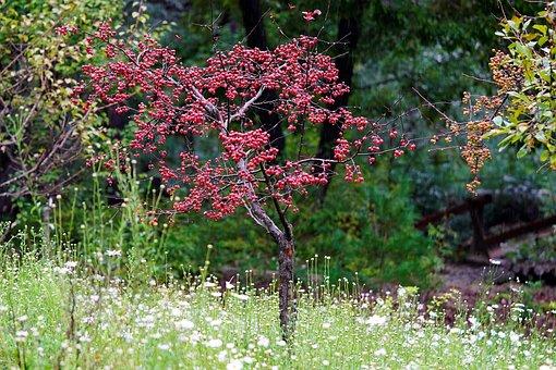 Apple, Flower Apple, Autumn, Fruit, Wood, Tree, Garden