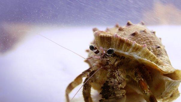 Kerala, India, Hermit Crab, Crab, Orange, Shell, Conch