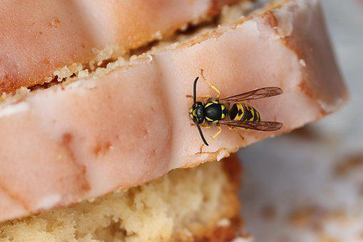 Wasp, Insect, Cake, Close Up, Sting, Yellow, Dangerous