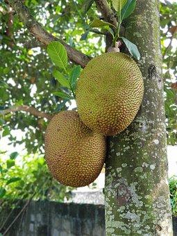 Jack Jackfruit, Fruit, Delicious, Breadfruit Tree
