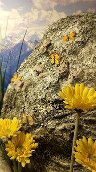 Konya, Kelebek, Vadi, Bahçe, Butterfly, Nature, Macro