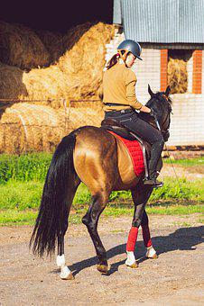 Woman, Riding, Horse, Animals, Mare, Jockey, Training