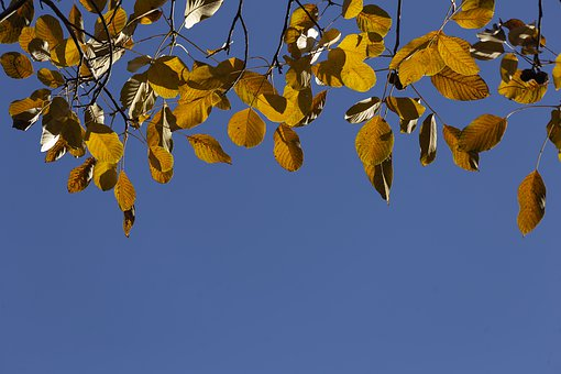 Colorful, Chromatic, Gold, Fall, Qom Province