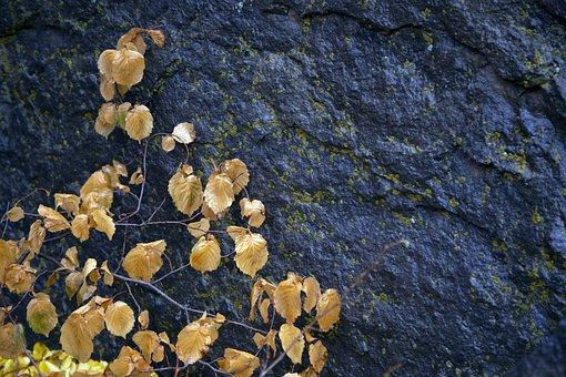 Colorful, Wallpaper, Color, Nature, Romantic, Autumn
