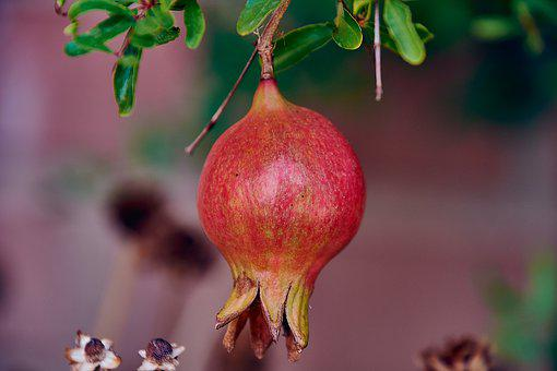 Granada, Fruit, Red, Dessert, Seeds