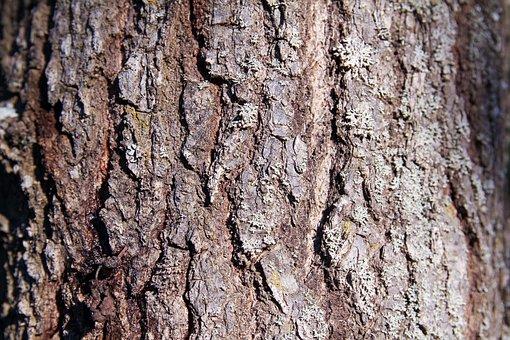 Tree, Bark, Texture, Nature, Trunk, Background, Biology
