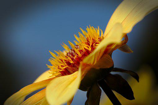 Flower, Sky, Autumn, Close Up, Yellow
