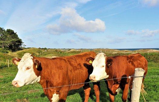 Cattle, Calves, Young Animals, Pasture, Landscape
