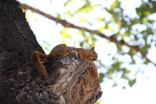 Squirrel, Tree, Furry, Animal, Creature, Wildlife
