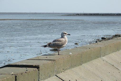 Seagull, Bird, Nature, Water Bird, Animal World, Animal