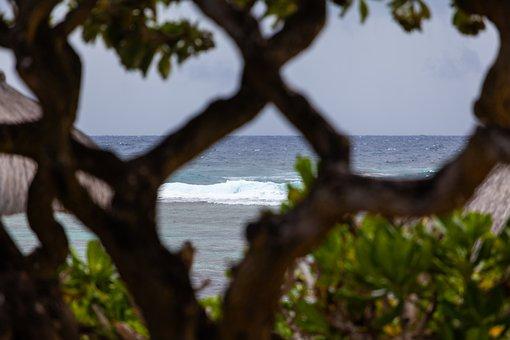 Tree, Beach, Sea, Wood, Ocean, Sand, Water, Nature