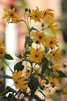 Sunflower, Flower, Summer, Yellow, Nature, Bright