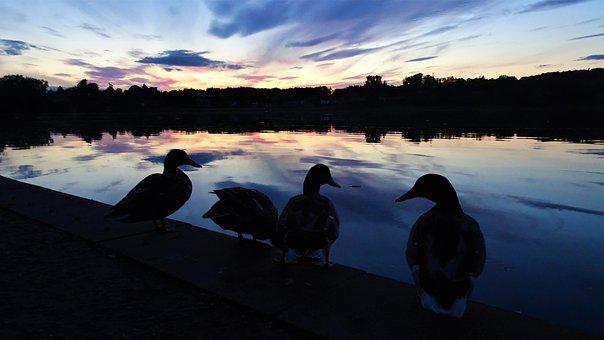 Silhouette, Ducks, Evening, Sunset, Clouds, Water, Sky
