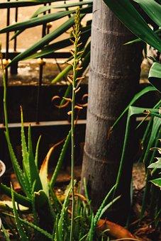 Elite, Flower, Wonderful, Nature, Spring, Autumn Leaves