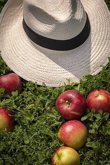 Apple, Hat, Harvest, Farm, Tree, Apple Tree, Meadow