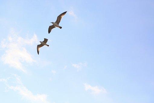 Seagull, Sky, Nature, Bird, Animal, Flying, Freedom