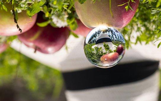 Apple, Hat, Apple Tree, Fruit, Harvest, Fall, Garden