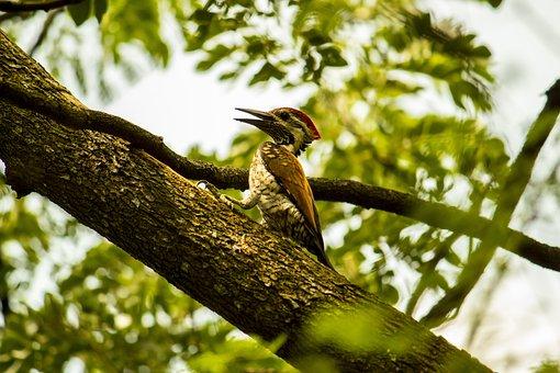 Woodpecker, Bird, Nature, Garden, Wildlife, Tree