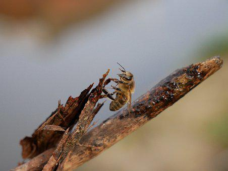 Bee, Insect, Wasp, Nature, Yellow, Animal, Fauna, Fly