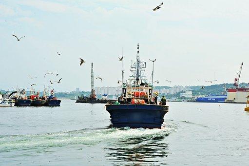 Times, Sea, Seagull, Voyage, Job, Sailor, Water, Boat