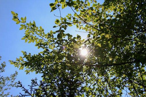 Sun, Tree, Leaves, Nature, Sky, Blue, Summer, Sunlight