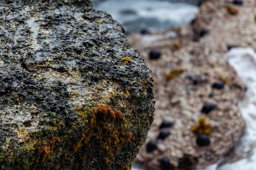 Wet Rocks, Coast, Mauritius, Coastline, Sea View