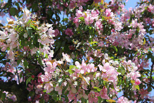 Flower, Nature, Tree, Spring, Summer, Garden, Plants