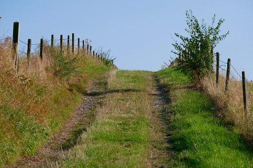 Hiking, Away, Nature, Landscape, Path, Trail