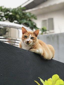 Cat, Fence, Pet, Urban, Nature