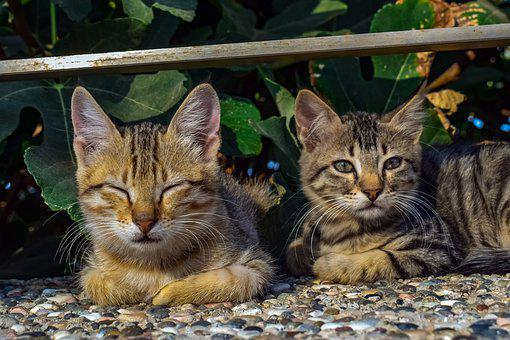Cats, Stray, Outdoors, Animal, Nature, Cute, Portrait