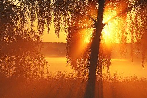 Sunrise, Morning Mist, Mood, Morgenstimmung, Sun