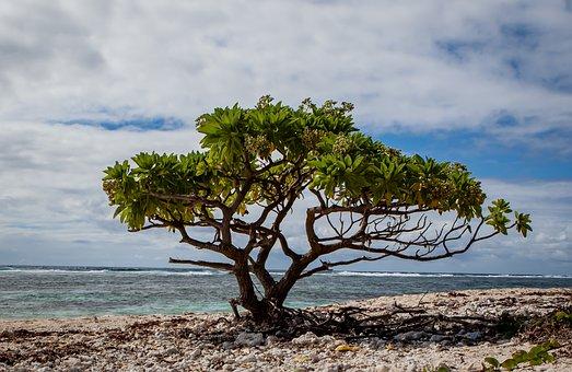 Lone Tree, Tree On Beach, Small Tree, Beach, Tree, Sand
