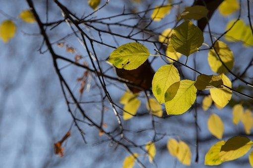 Autumn, Fall, Nature, Tree, Colorful, Trees