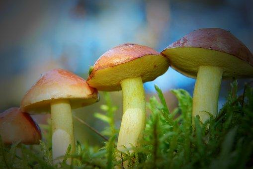 Maślaki, Mushrooms, Hats, Moss, Forest, Sky, Vegetation