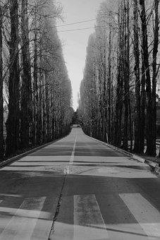 City, Path, Black, Trees, Walk, Urban, Street, Unknown