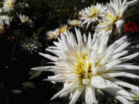 White, Flower, Garden, Plant, Bloom, Spring, Nature