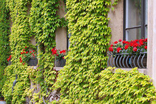 Facade, Wine Partner, House Facade, Window