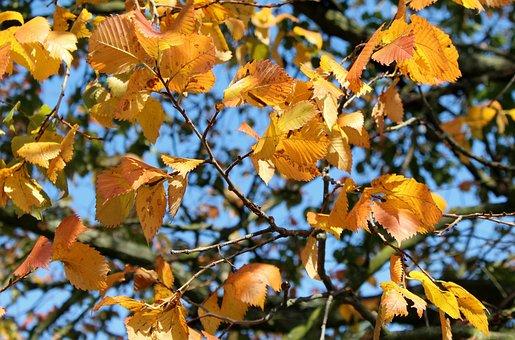 Tree, Foliage, Yellow Leaves, Autumn, Figure, Nature