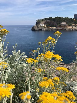 Landscape, Sea, Cliff, Yellow, Blue, Flowers