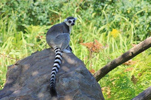 Marmoset, Monkey, Nature, Mammals, Zoo, Primate, Wild